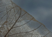 Dried leaf on winter trail at Penitentiary Glen