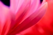 web-floral-1