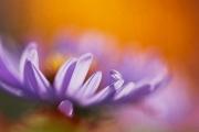 web-floral-2