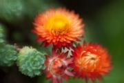 web-floral-3