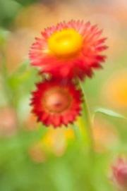web-floral-4