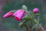 web-floral-6