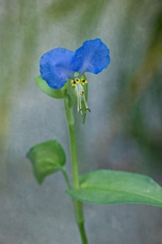 web-floral-7