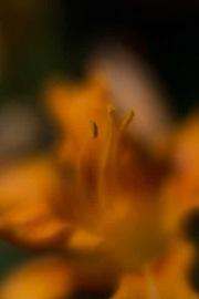 web-floral-8