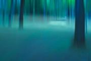 The Phantasmagoric Forest