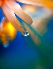 Water drop in butterfly garden at Holden Arboretum