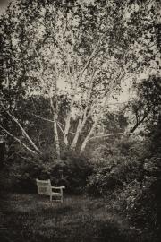 Holden Arboretum bench and birch 2
